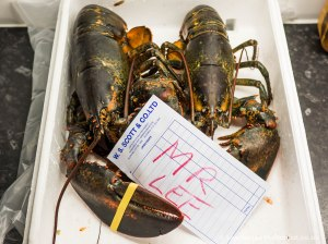 Lobsters with my name on them